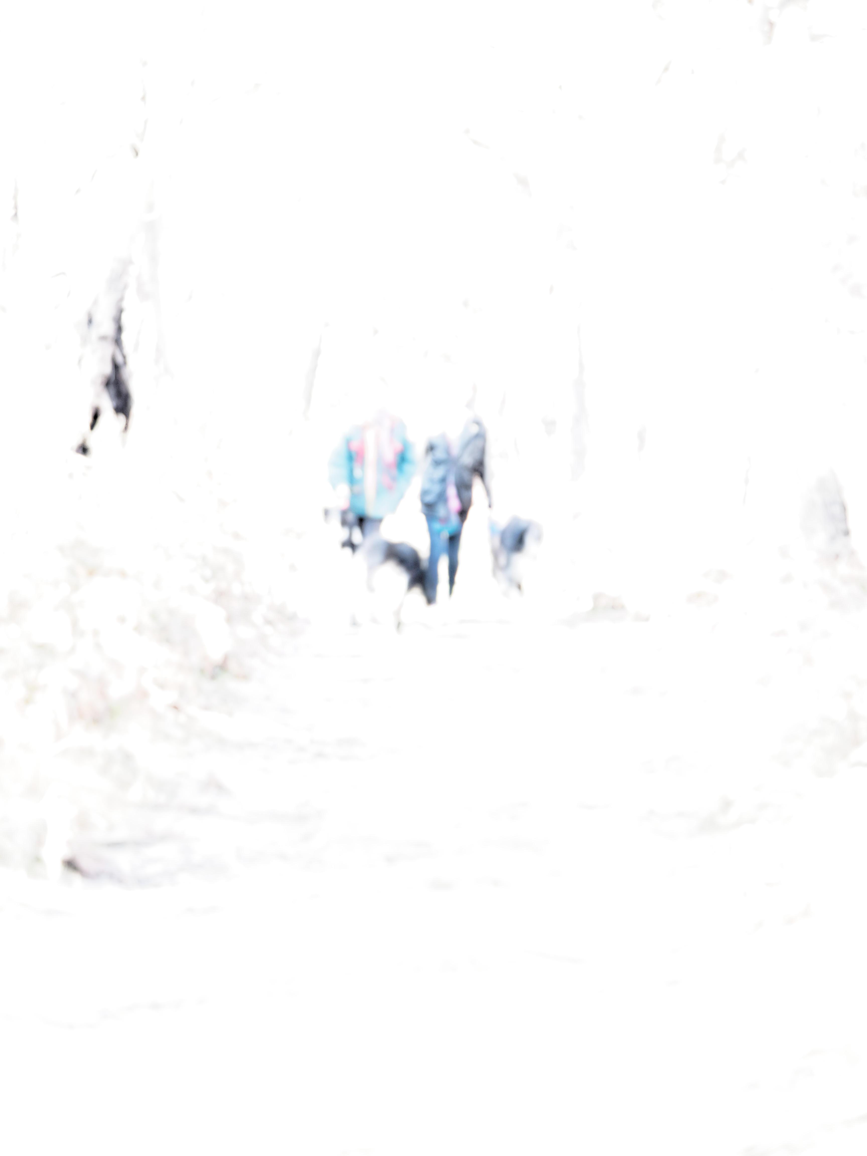 Walk-in-forest-2.jpeg