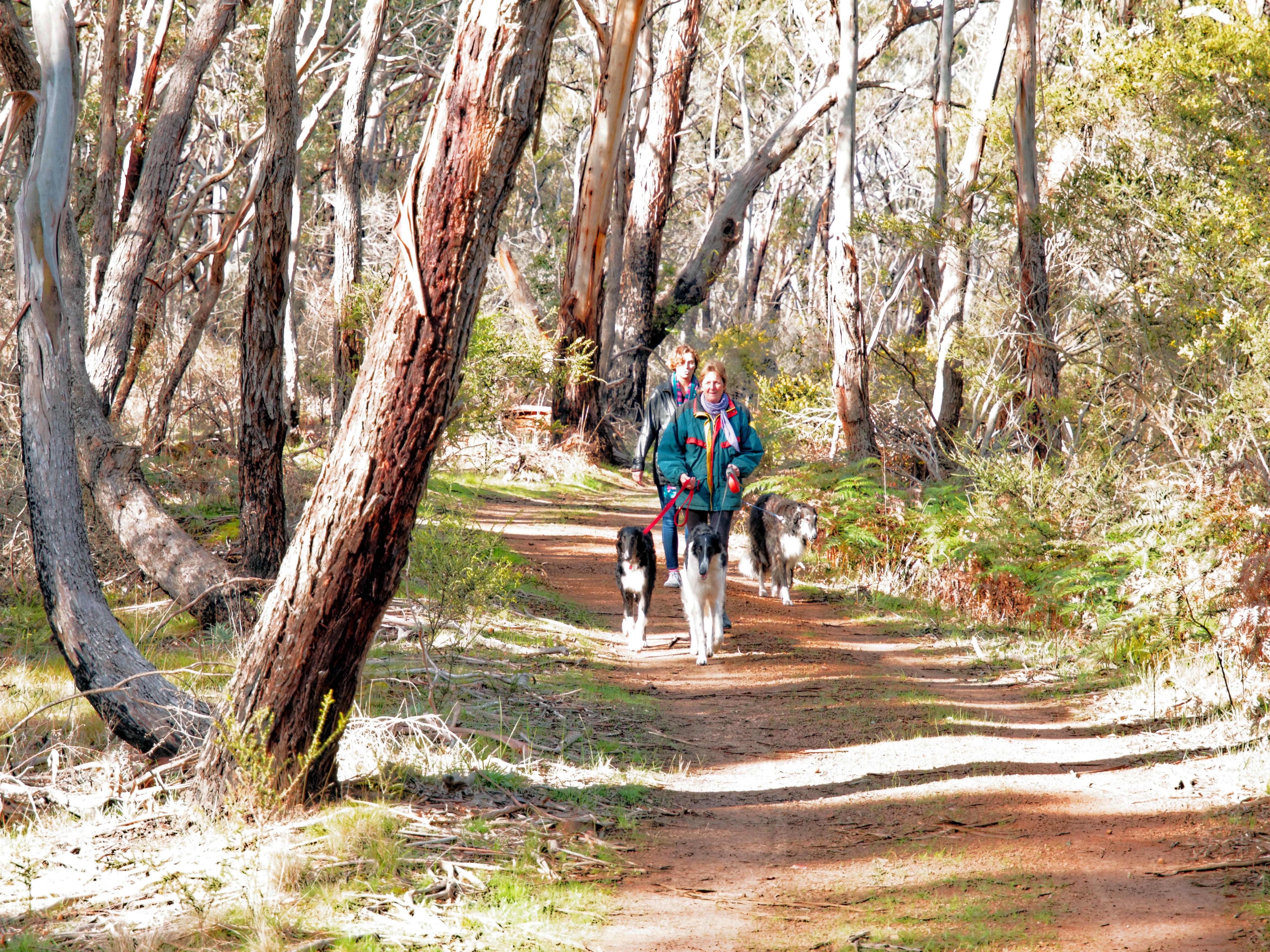 Walk-in-forest-26.jpeg