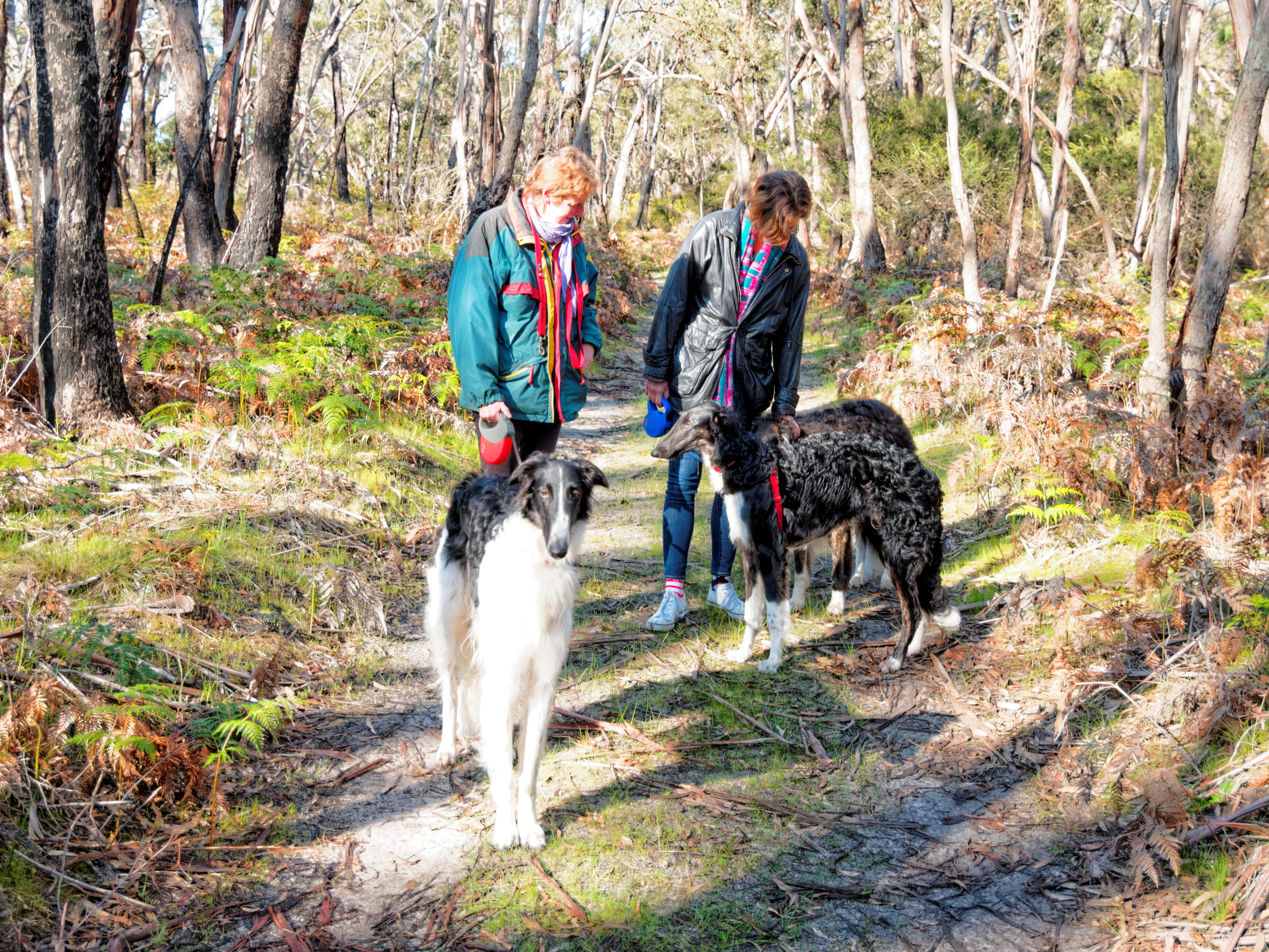 Walk-in-forest-9.jpeg