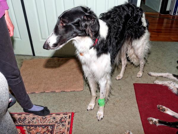 Bandaged-Nikolai-1.jpeg
