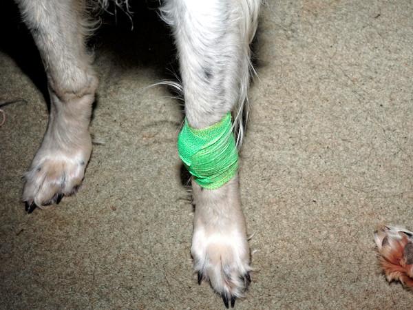 Bandaged-Nikolai-3.jpeg