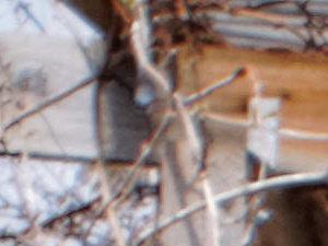 15mm-detail-2.jpeg