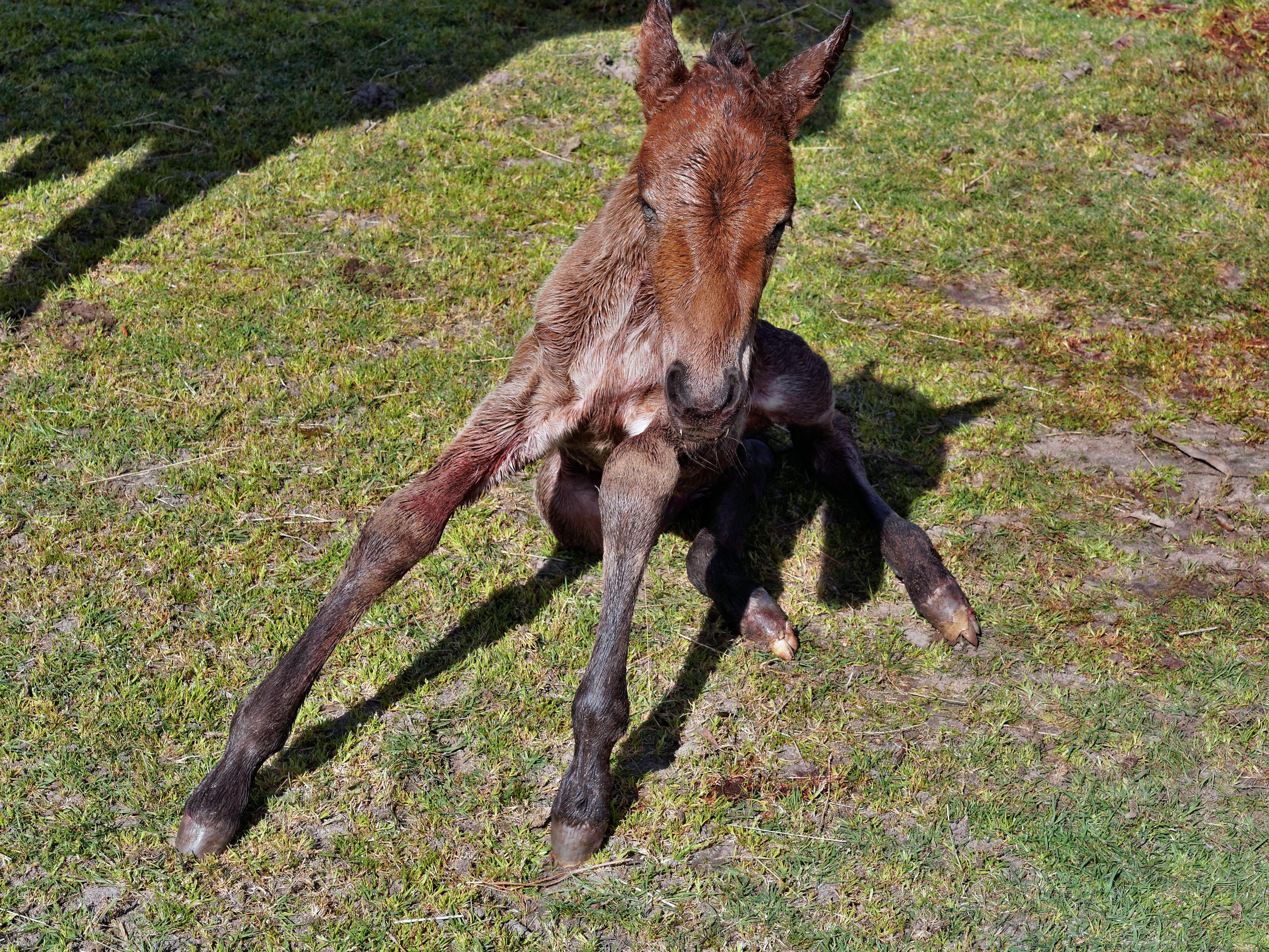 New-foal-12.jpeg