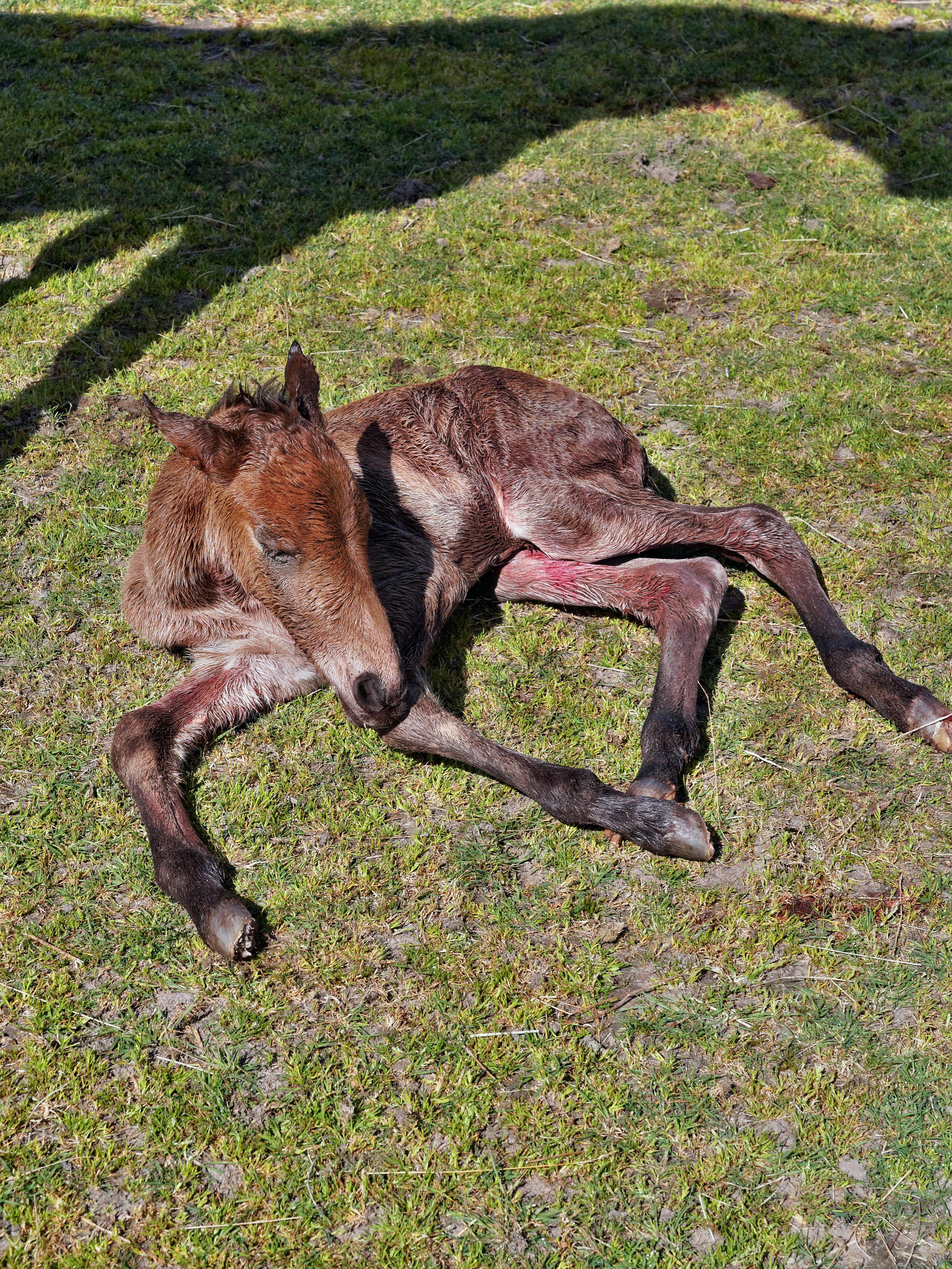 New-foal-13.jpeg