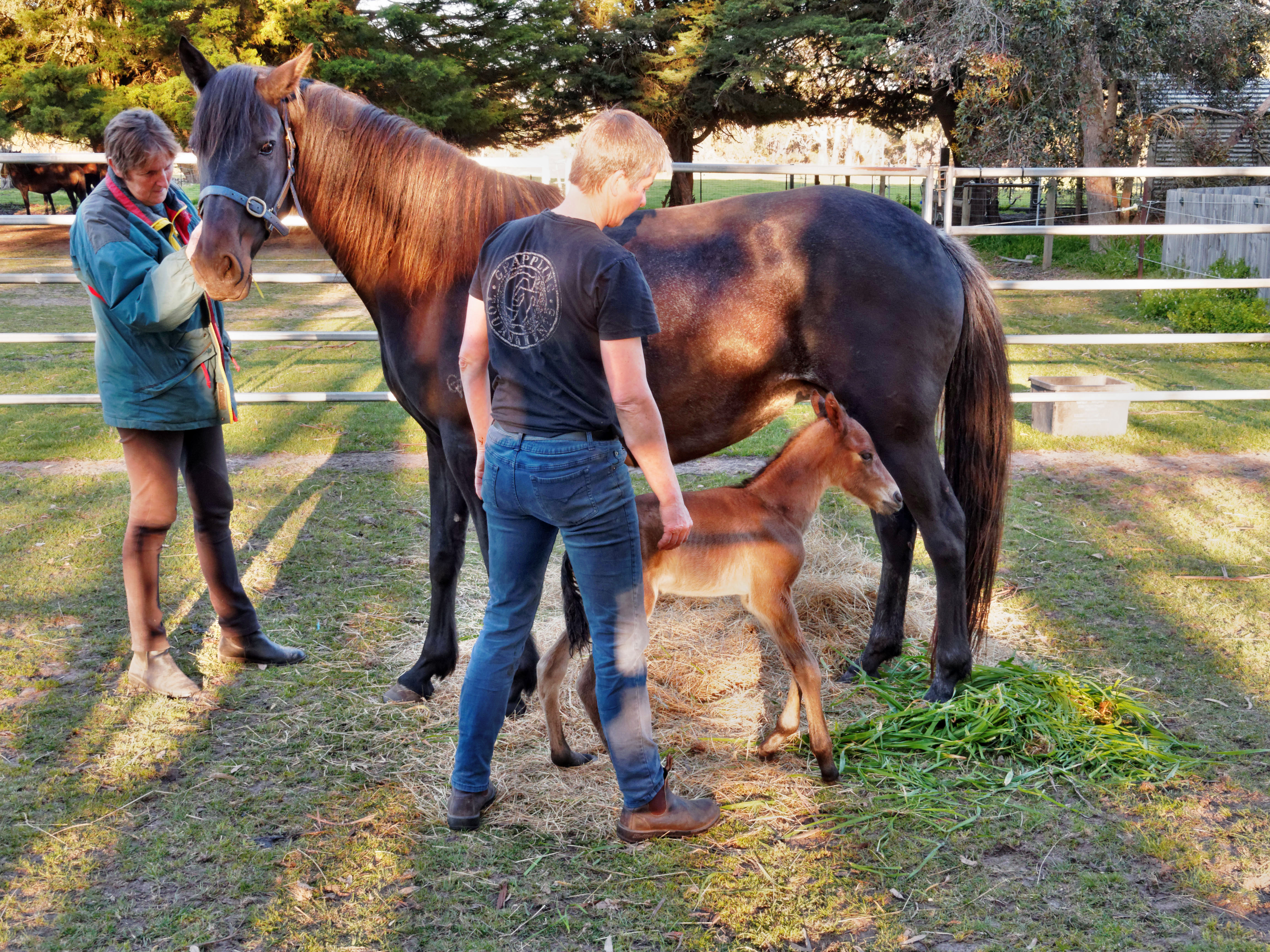 New-foal-18.jpeg