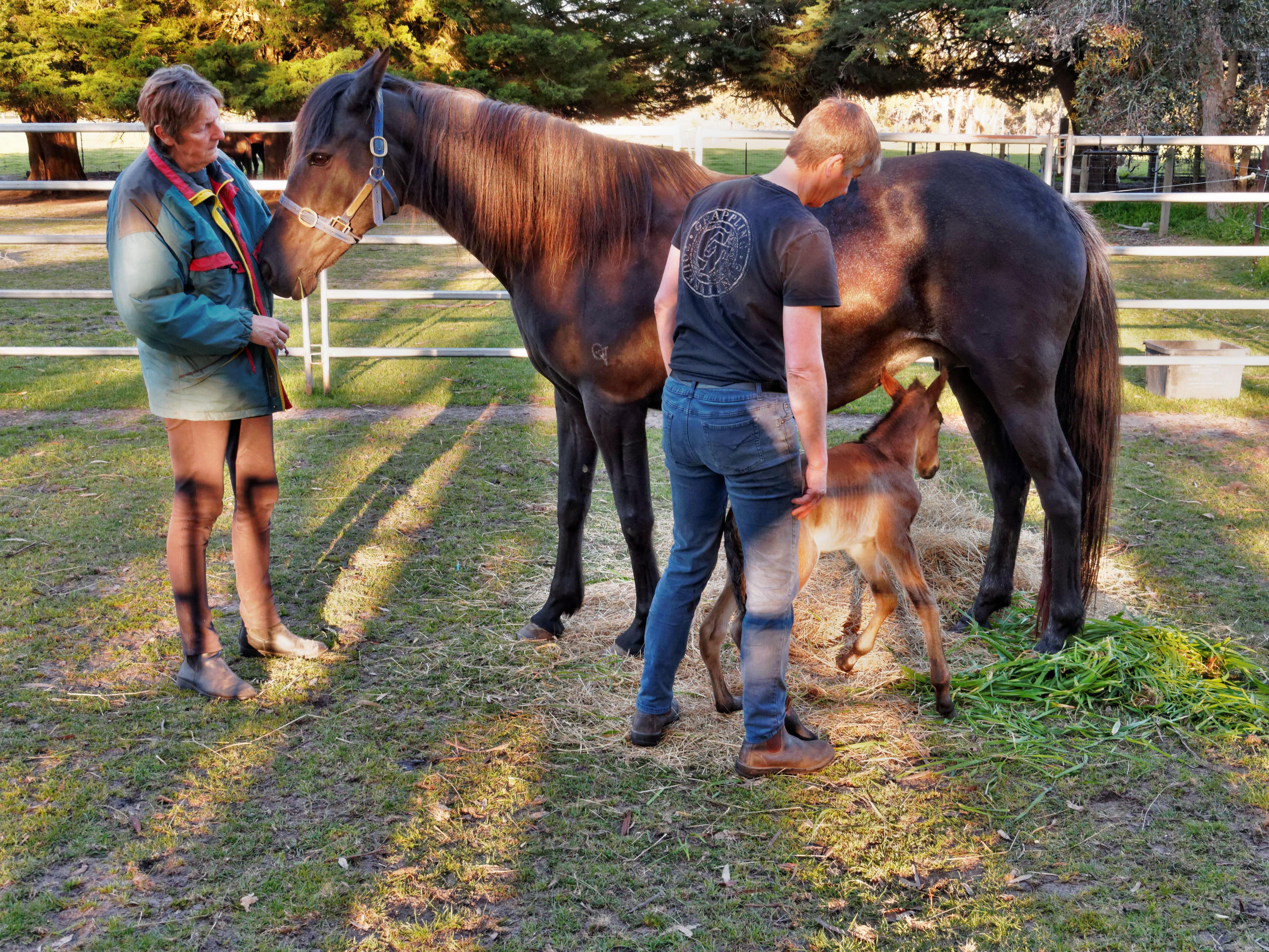 New-foal-19.jpeg