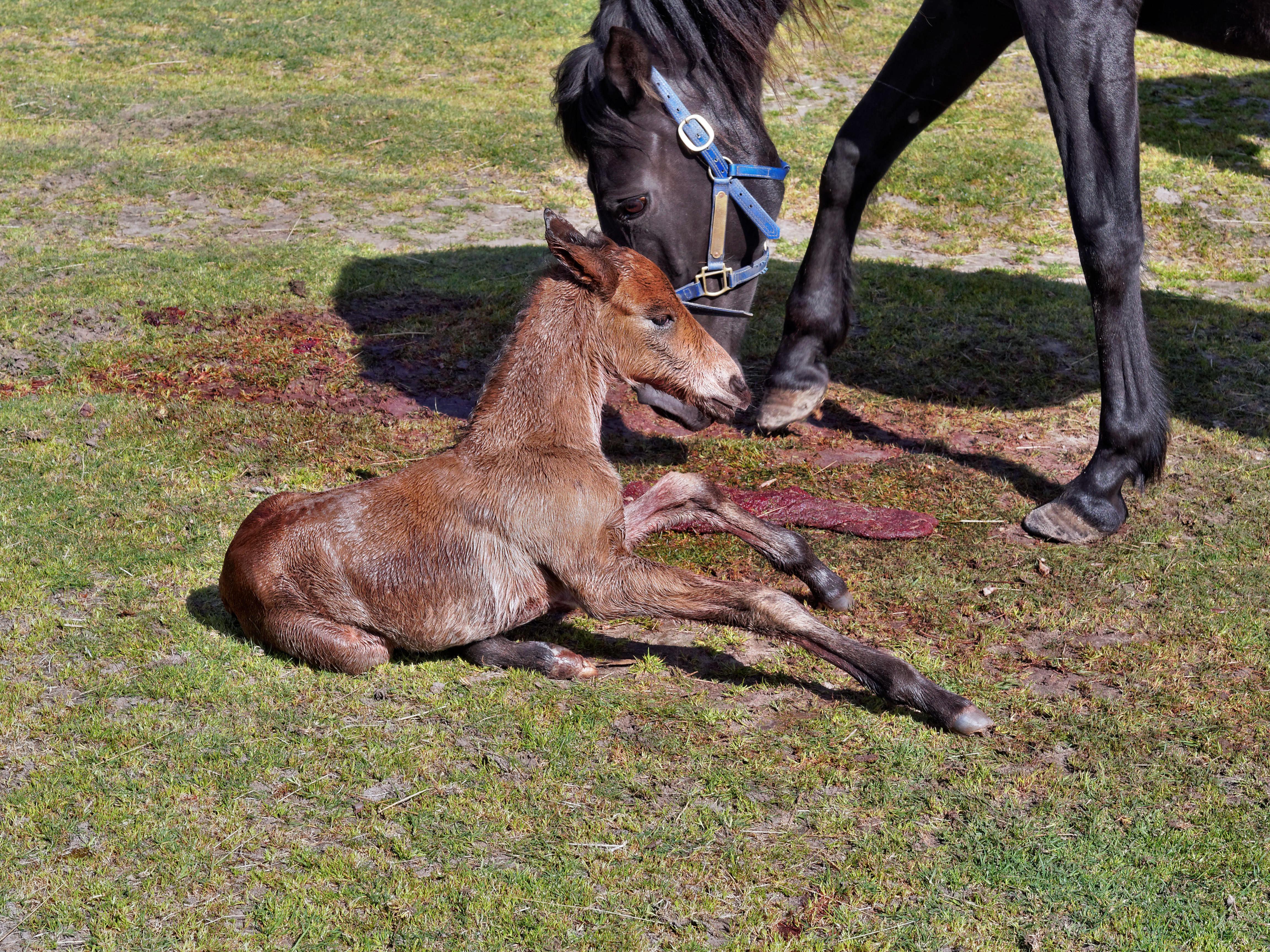 New-foal-7.jpeg