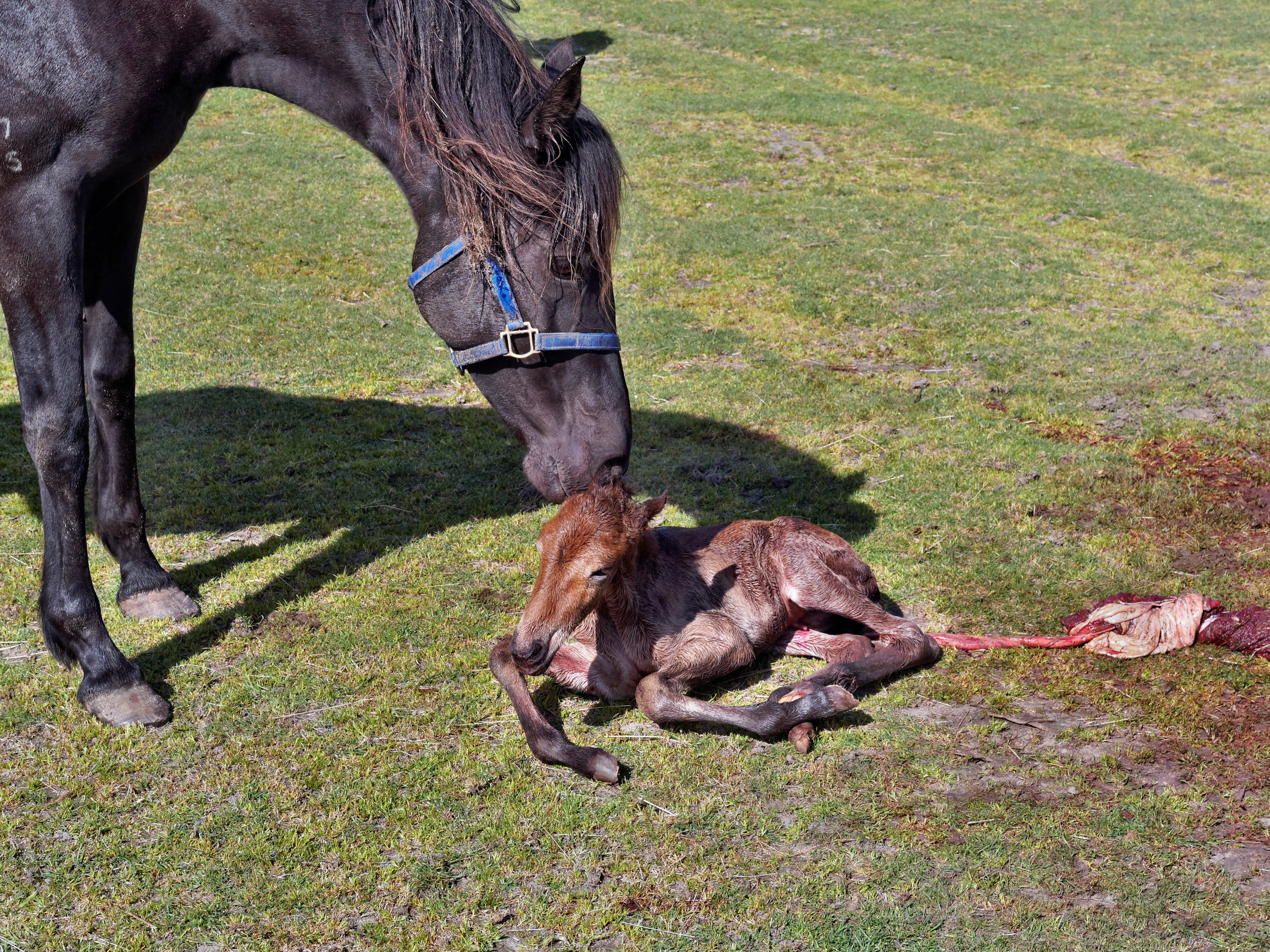 New-foal-9.jpeg