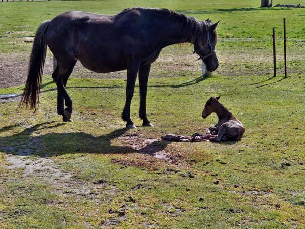 New-foal-1.jpeg