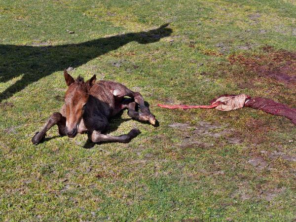 New-foal-10.jpeg