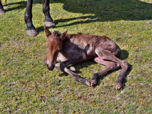 New-foal-14.jpeg