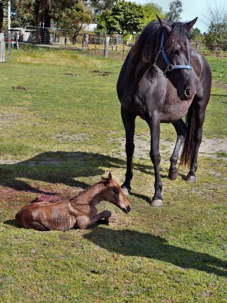 New-foal-2.jpeg