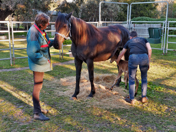 New-foal-20.jpeg