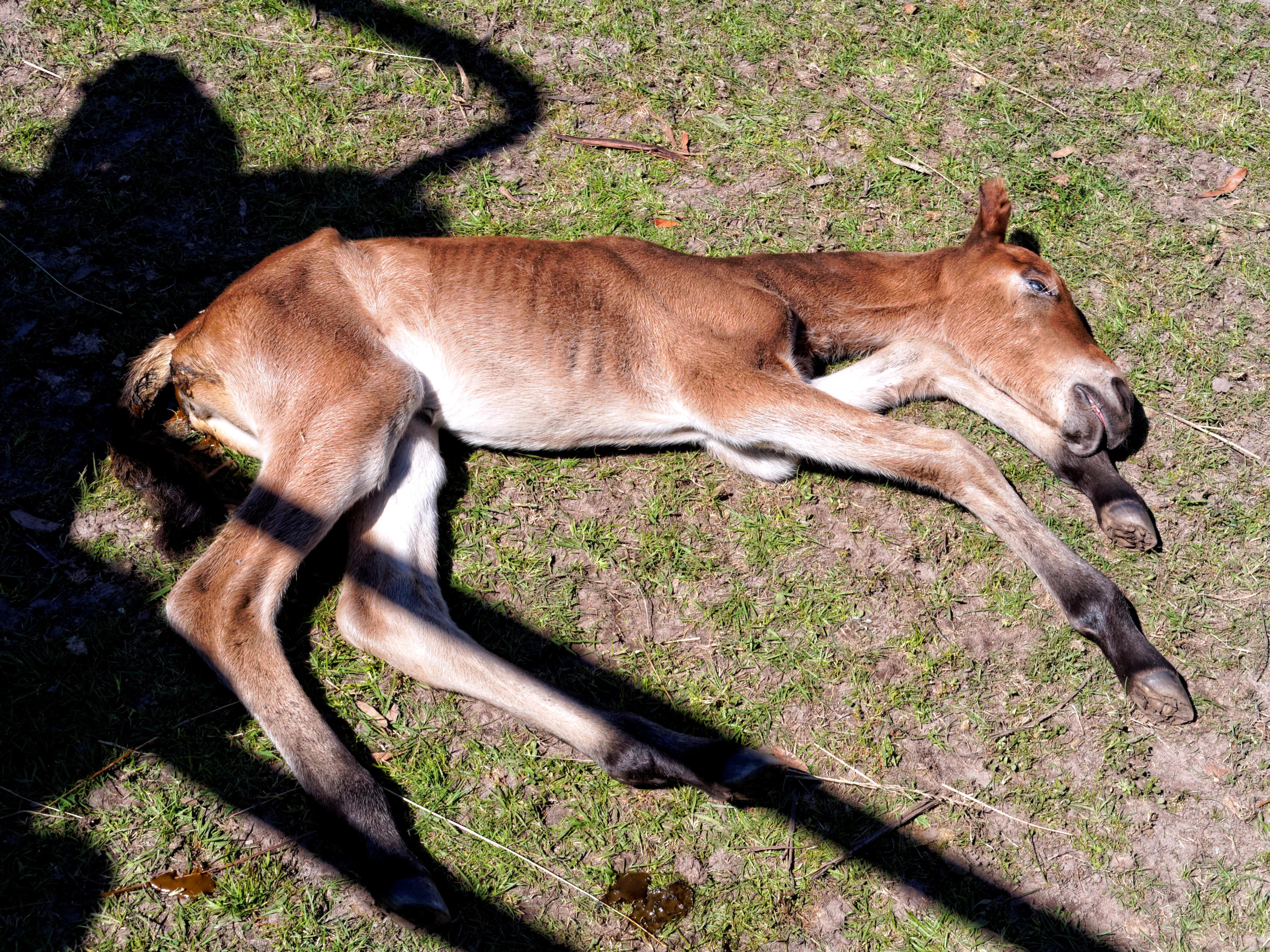 New-foal-15.jpeg