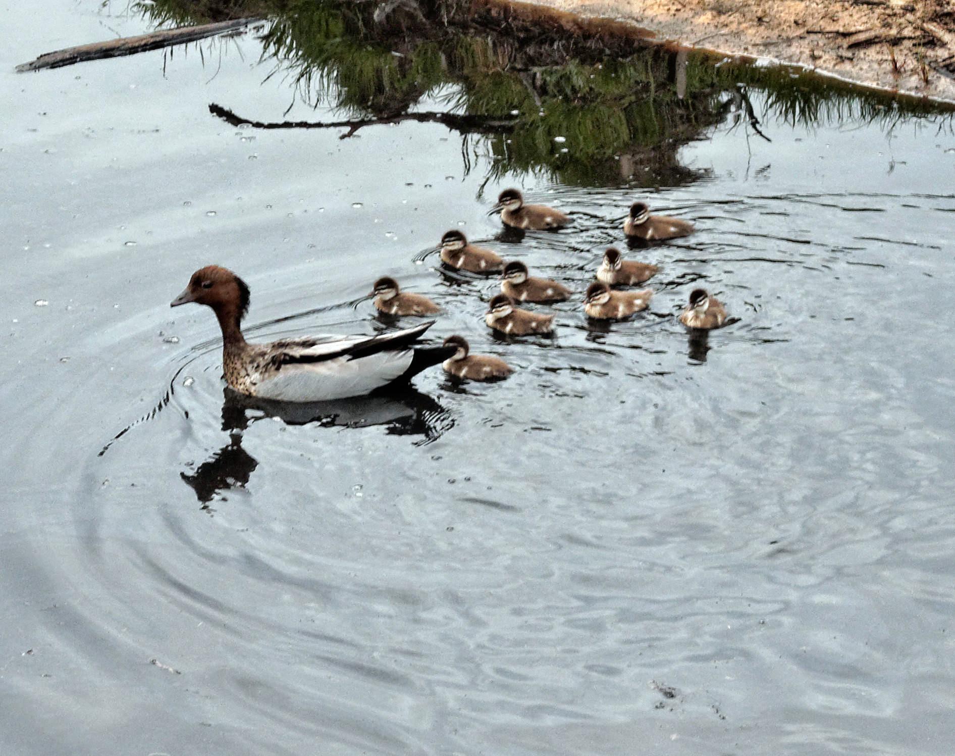 ducks-4.jpeg