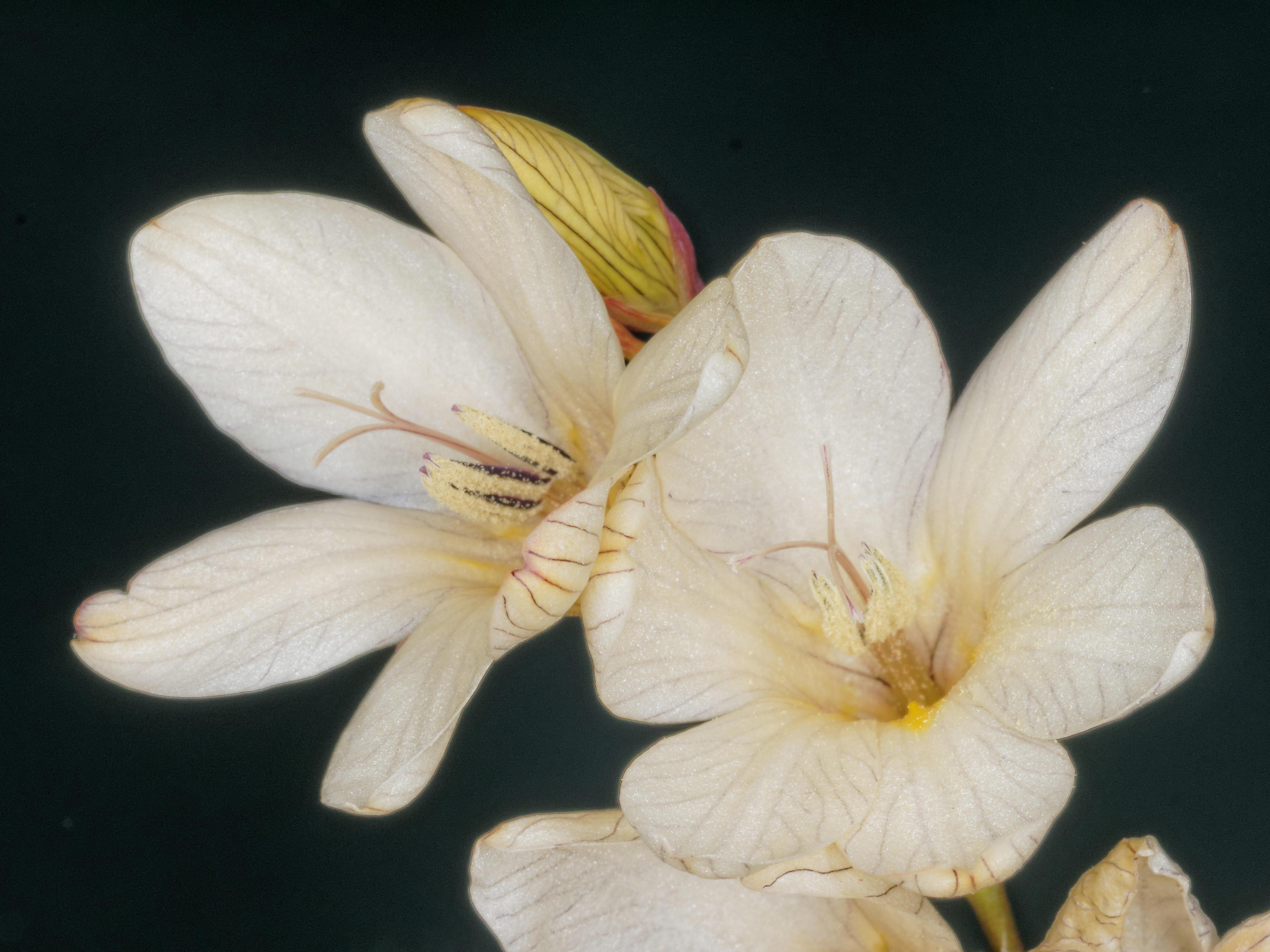 Mystery-flower-9.jpeg