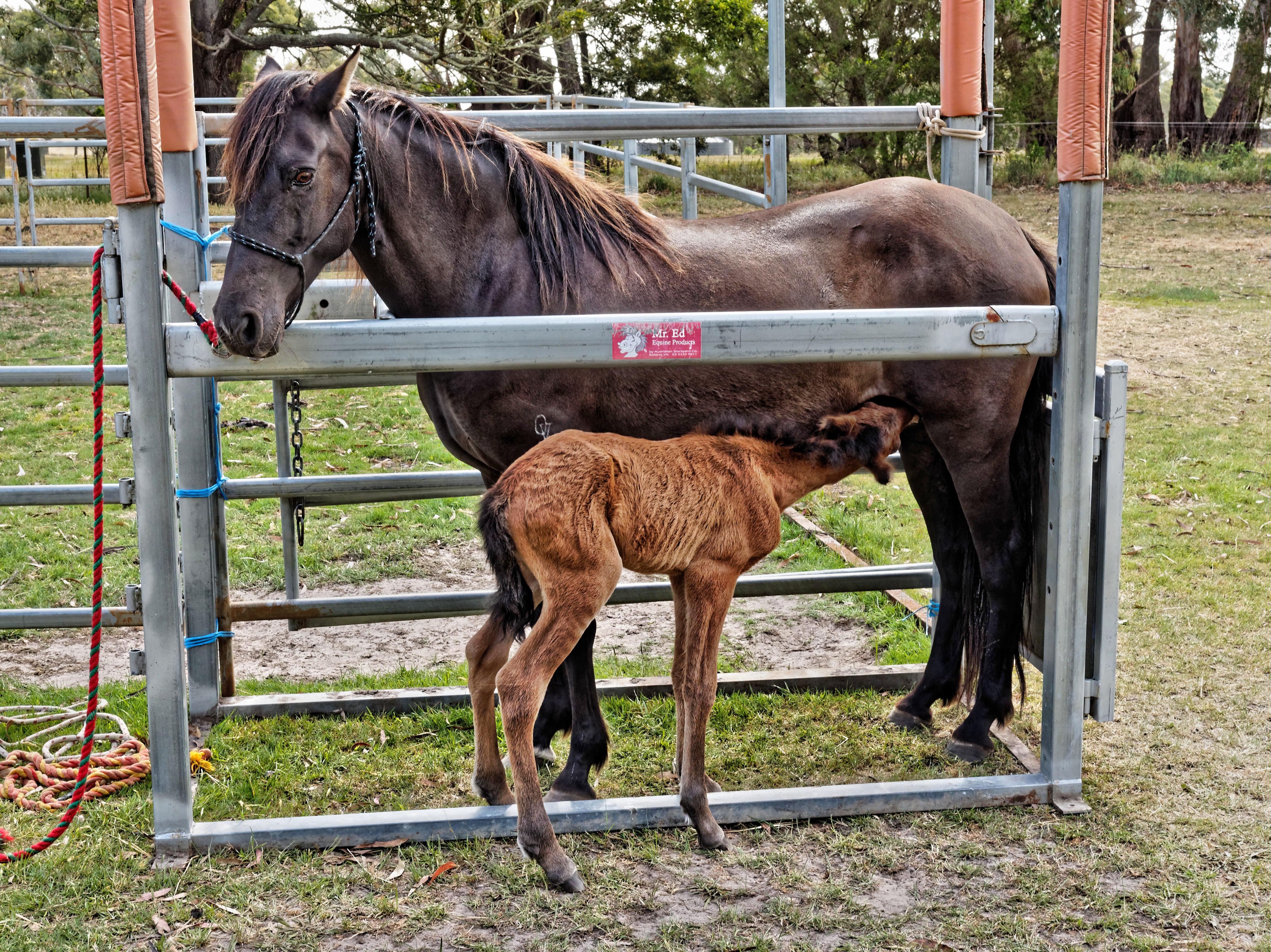 Foal-16.jpeg