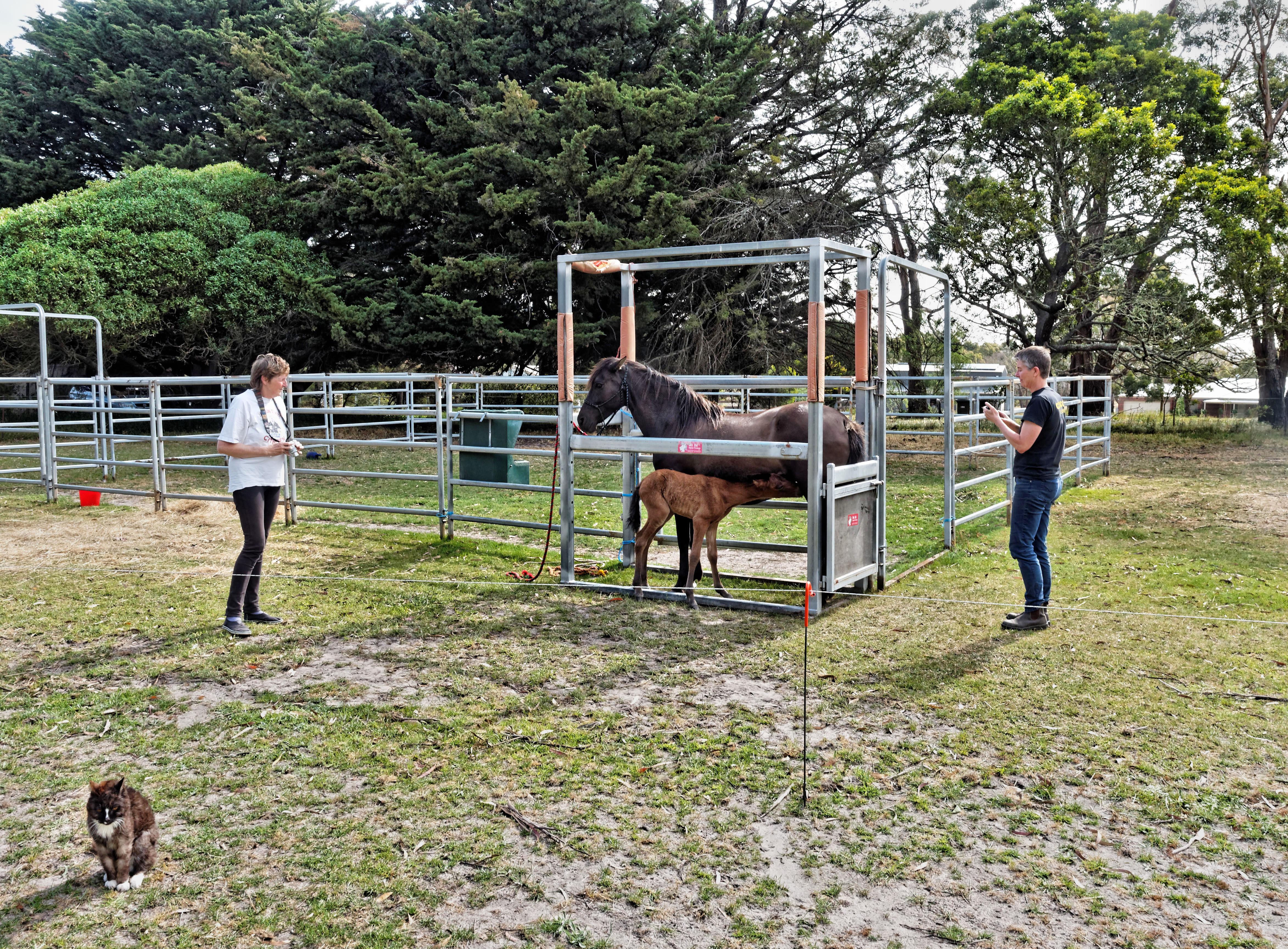 Foal-19.jpeg