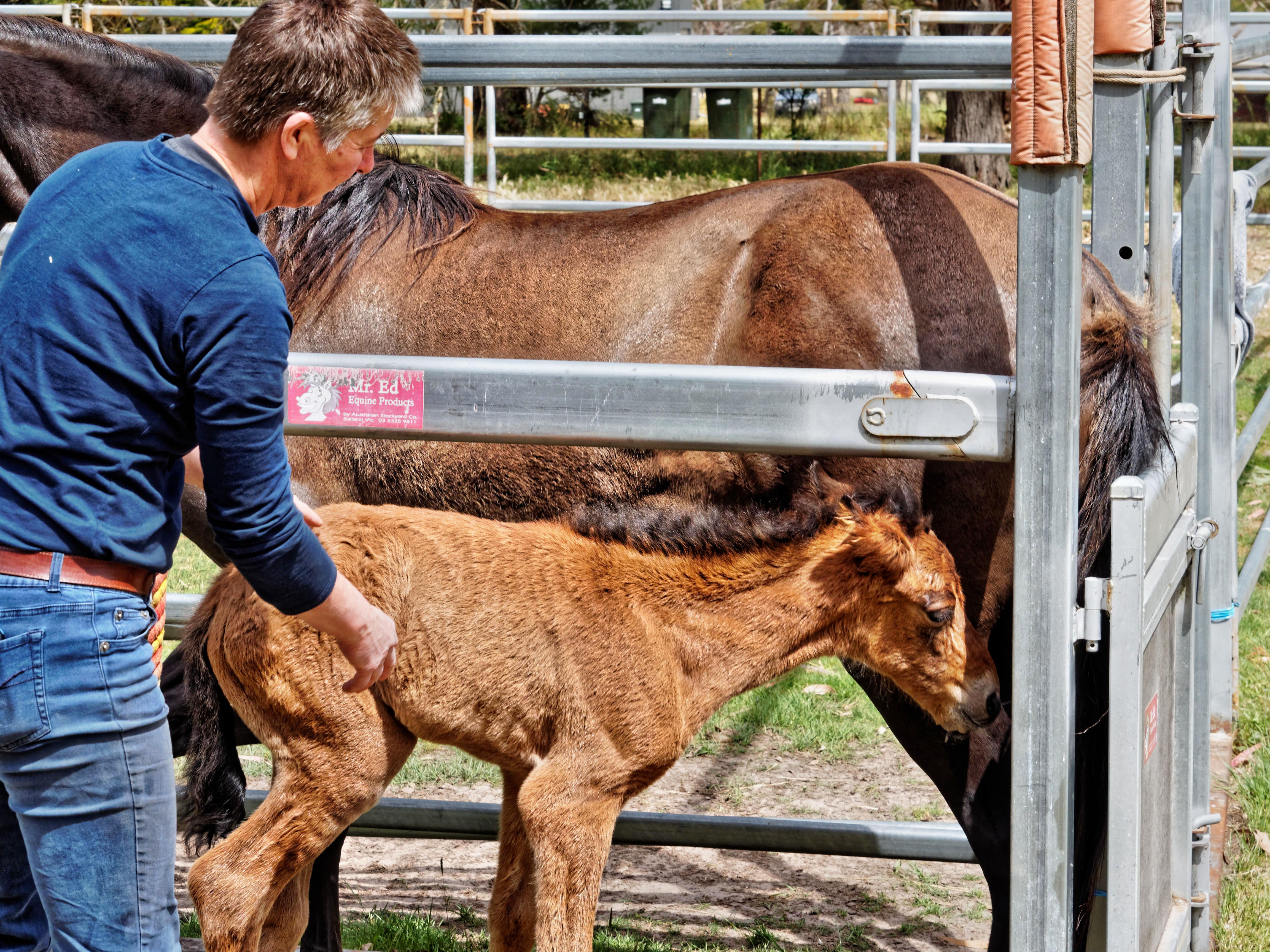 Foal-6.jpeg