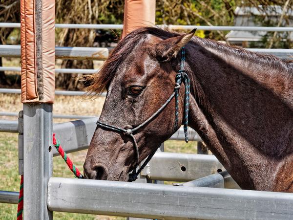 Foal-9.jpeg
