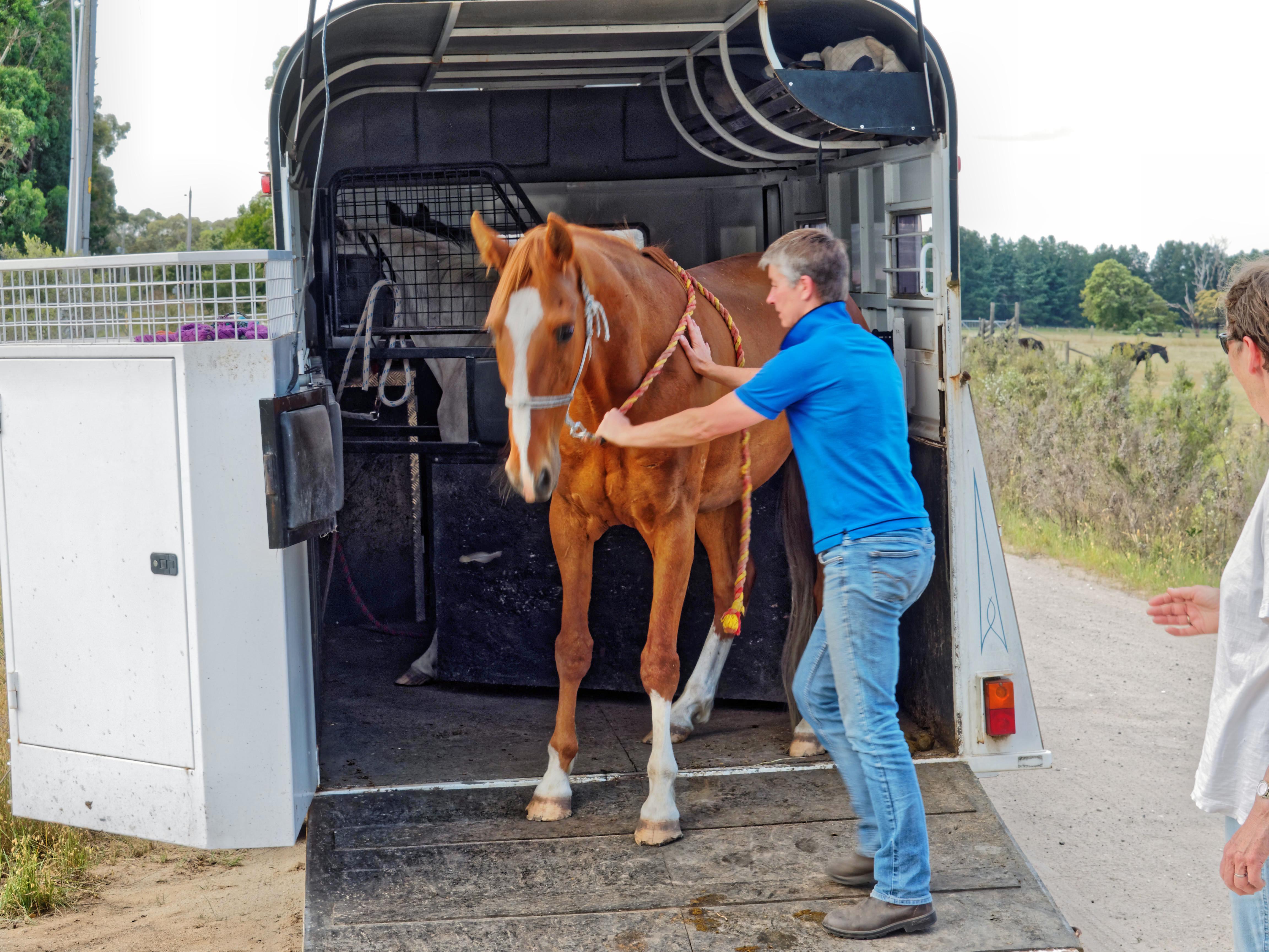 Horse-arrival-2.jpeg