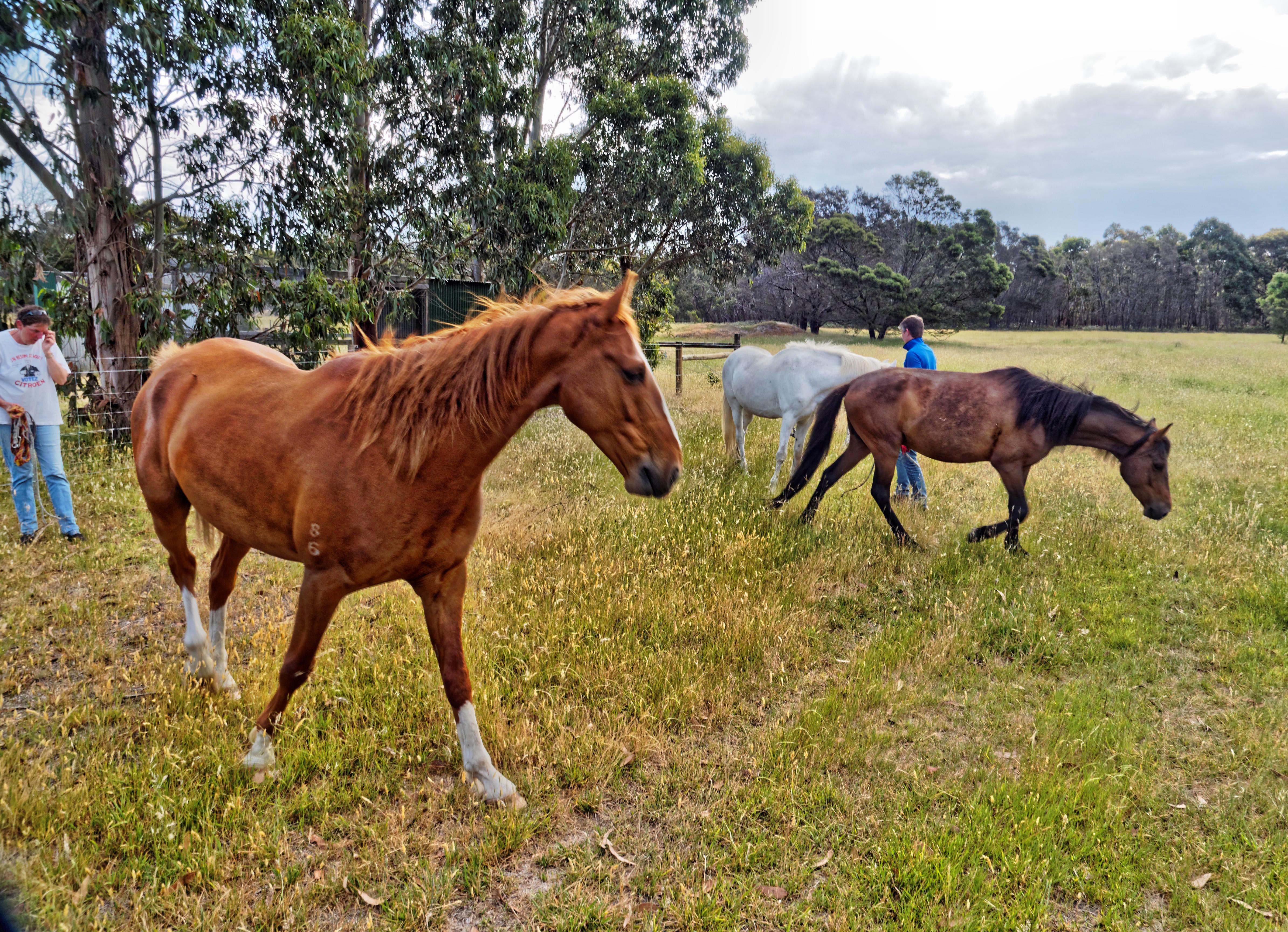 Horse-arrival-6.jpeg