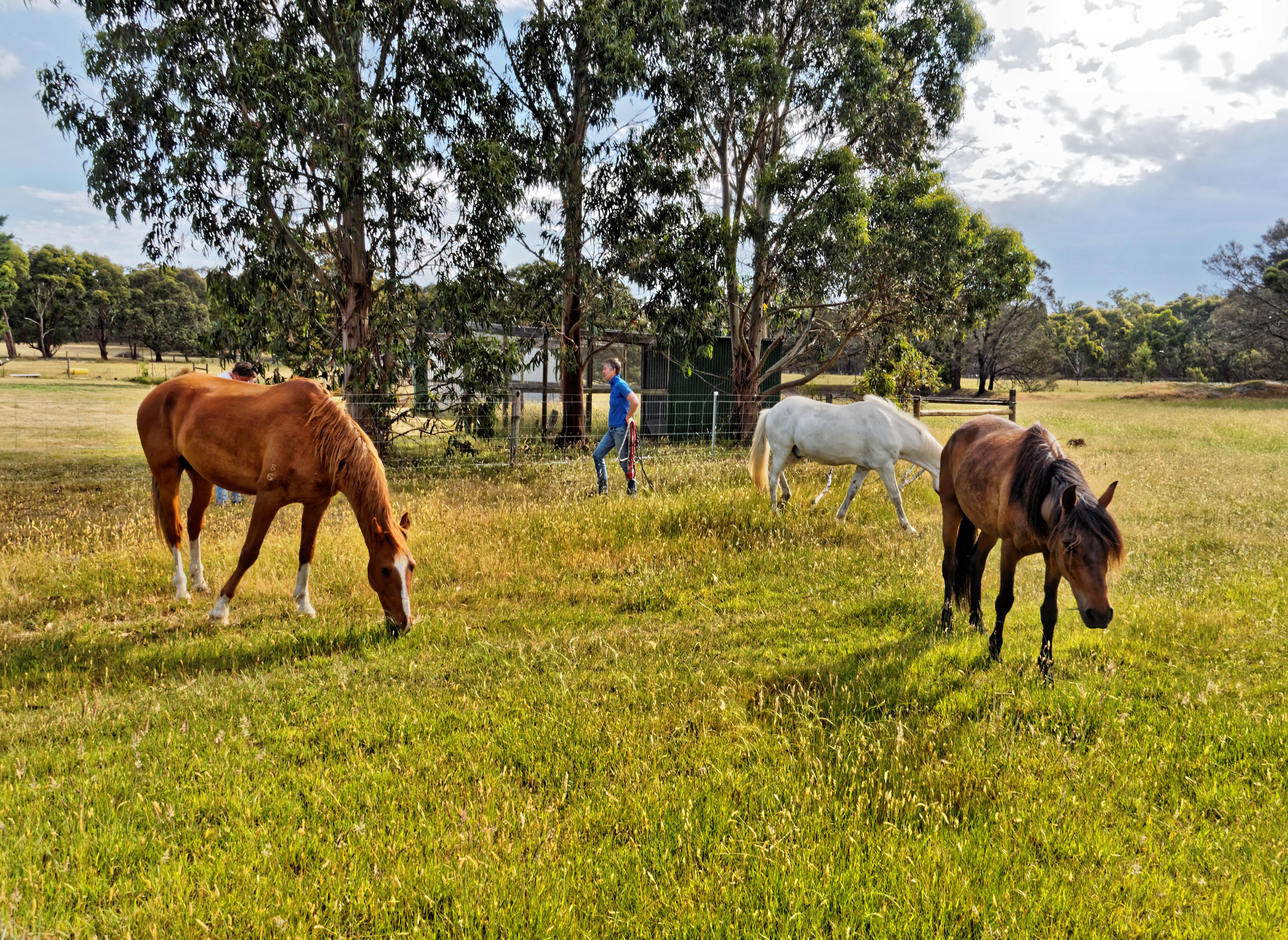 Horse-arrival-7.jpeg