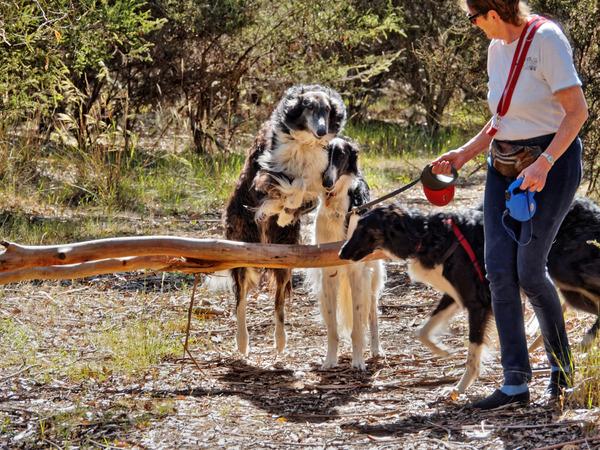 Dogs-and-log-4.jpeg