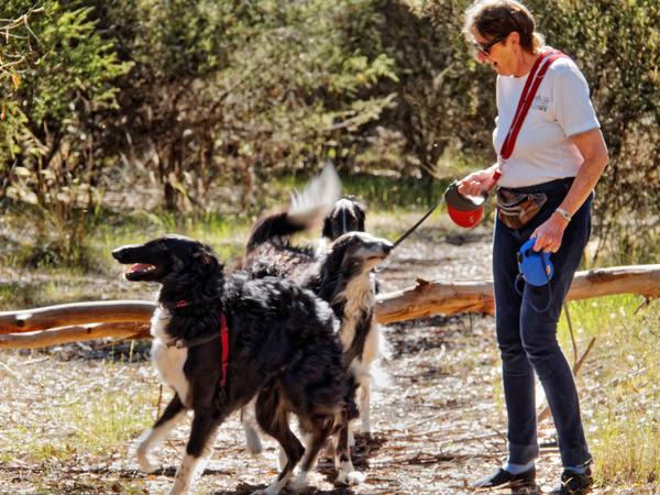 Dogs-and-log-5.jpeg