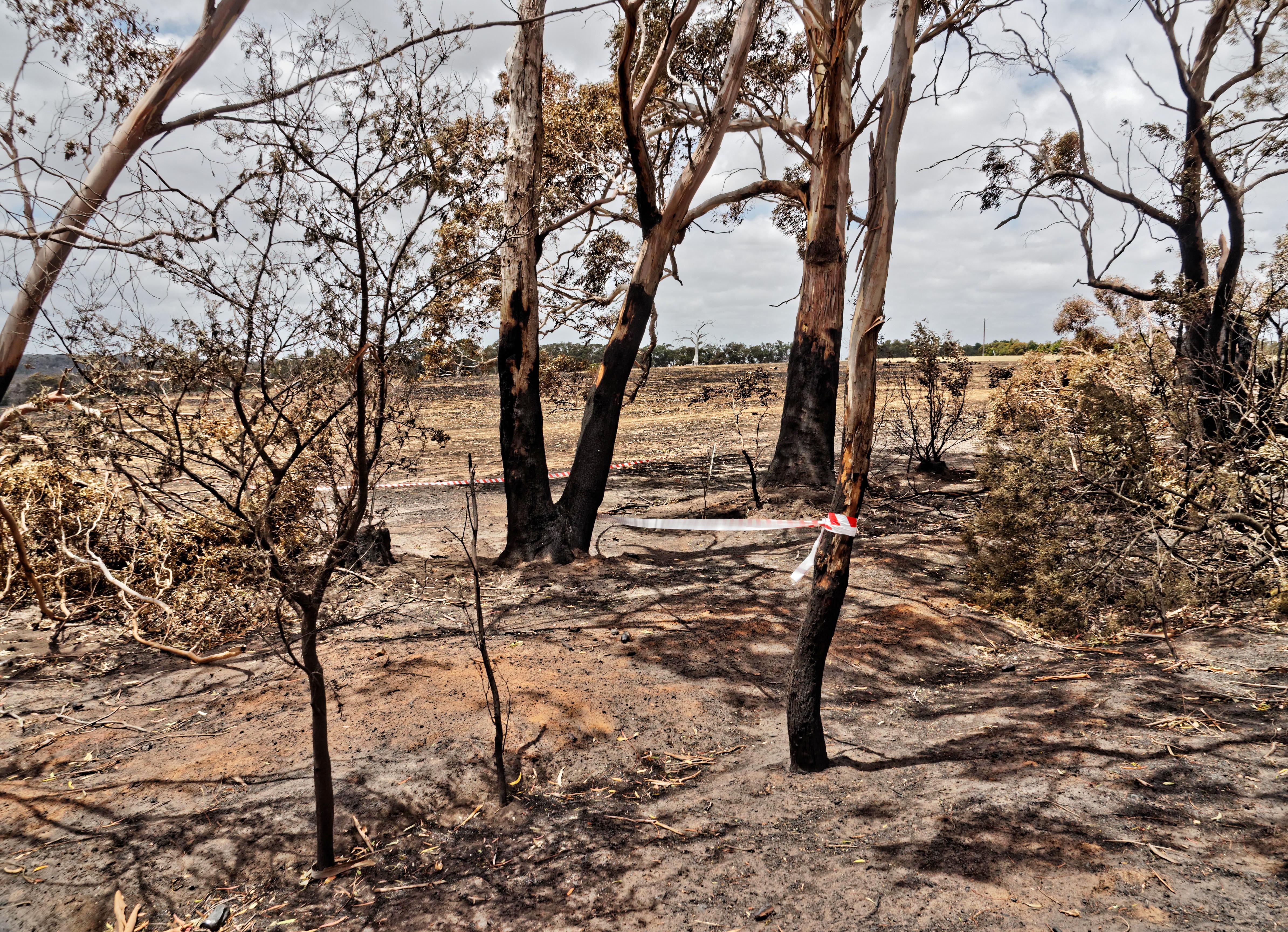 Bushfire-3.jpeg