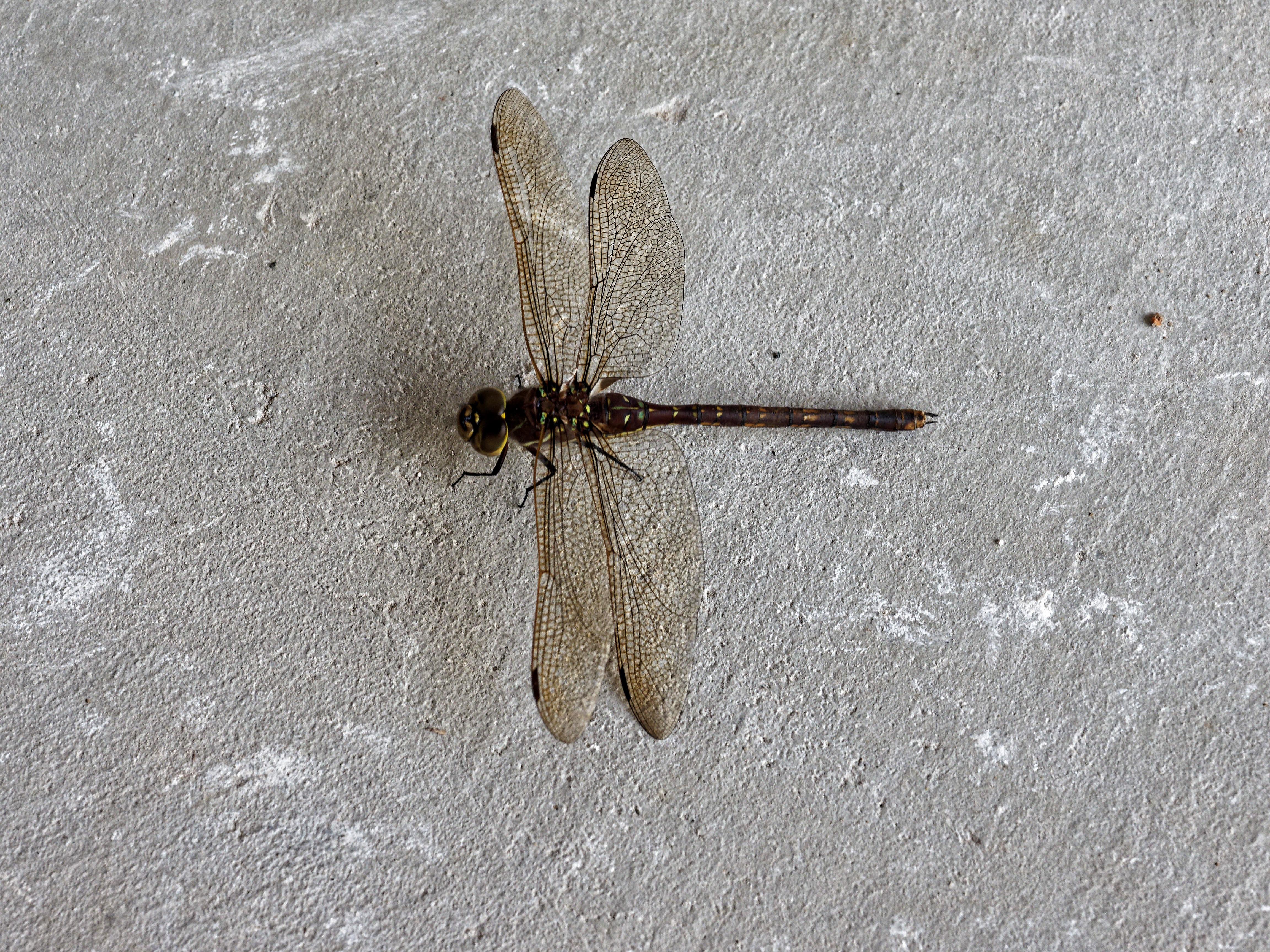 Dragon-fly-1.jpeg
