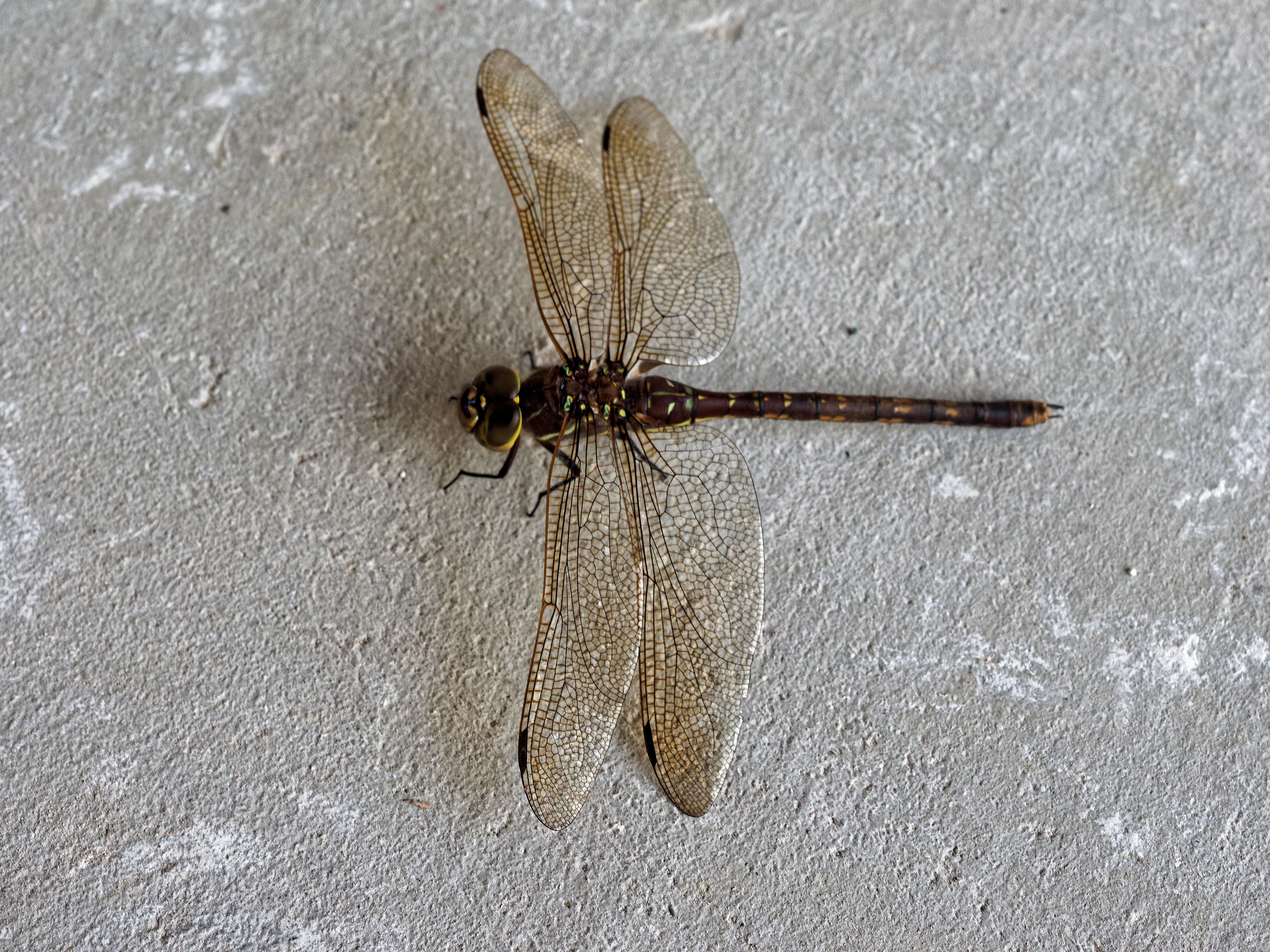 Dragon-fly-2.jpeg