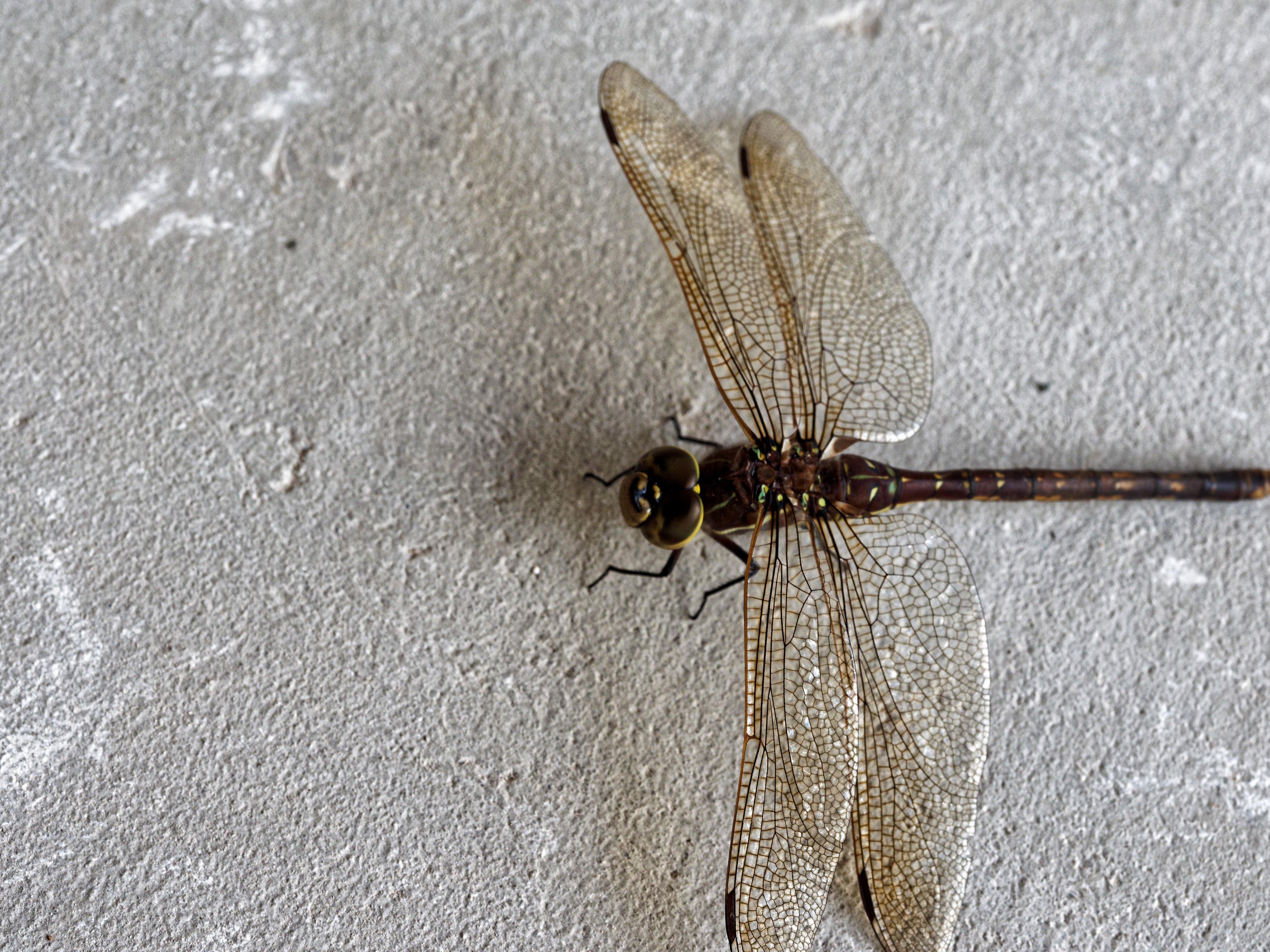 Dragon-fly-3.jpeg