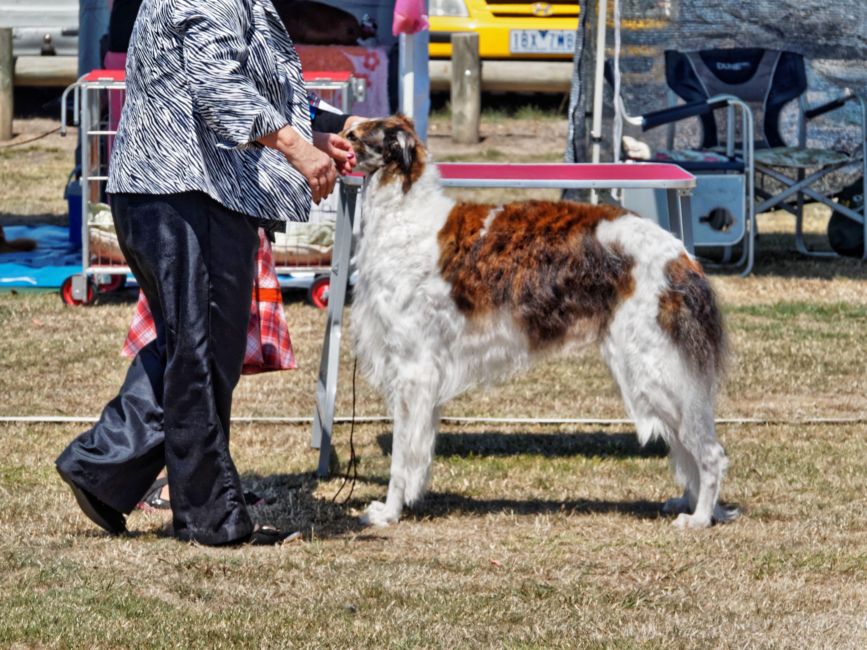 Dog-show-10.jpeg