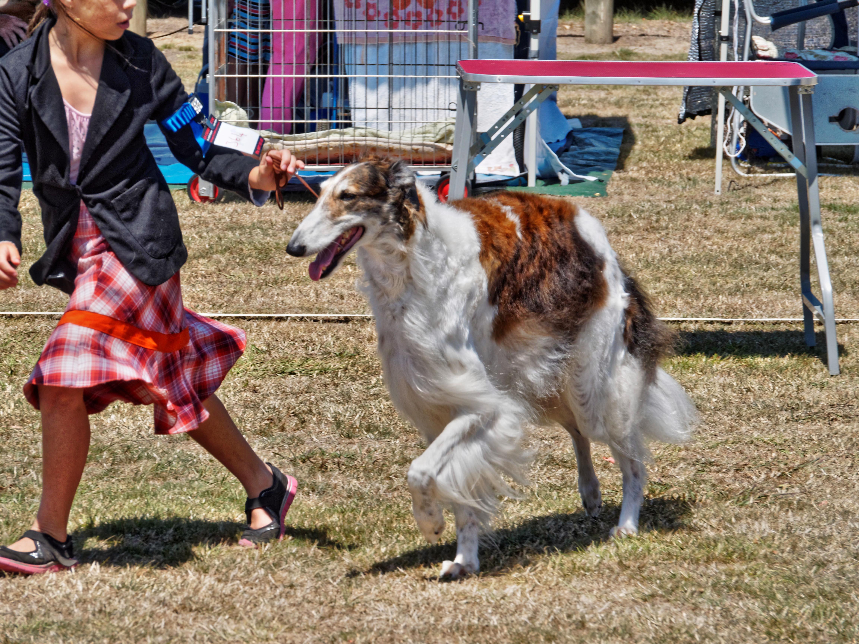 Dog-show-11.jpeg