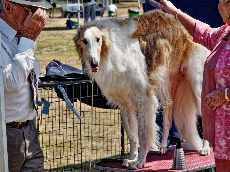 Dog-show-2.jpeg