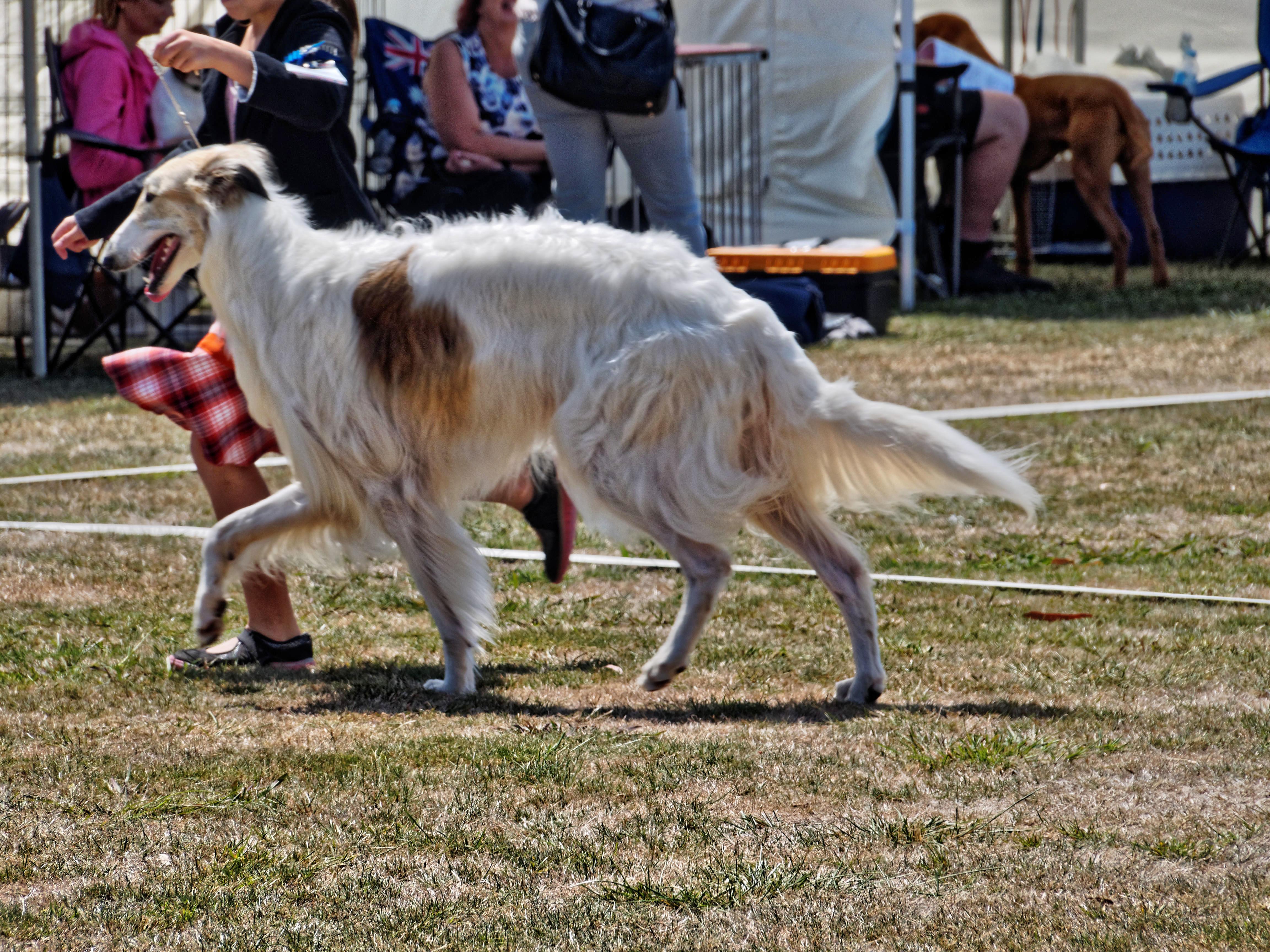 Dog-show-4.jpeg
