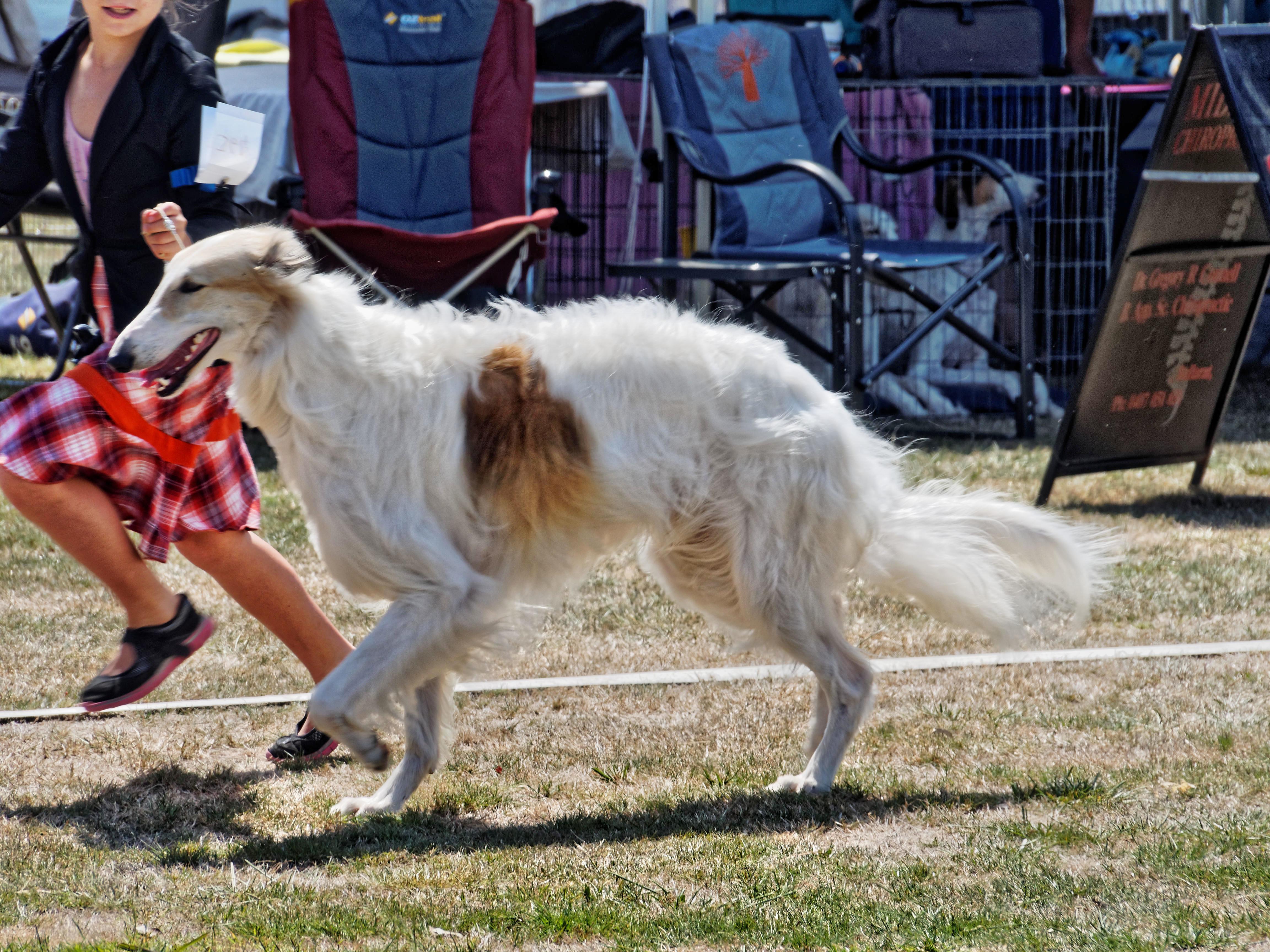 Dog-show-5.jpeg