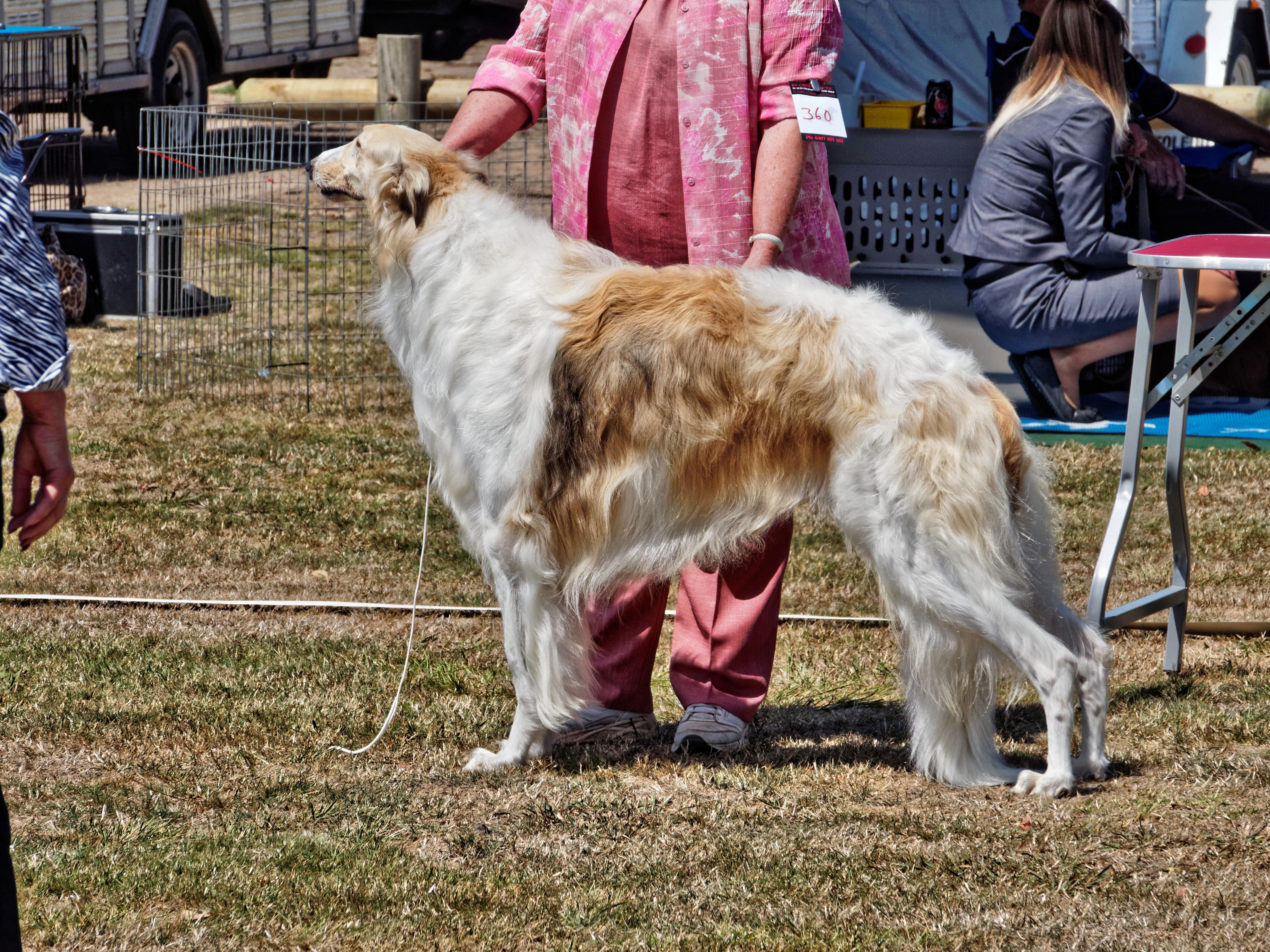 Dog-show-6.jpeg