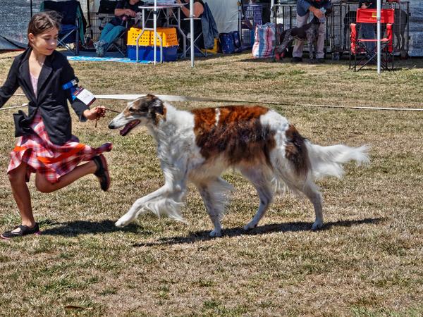 Dog-show-12.jpeg