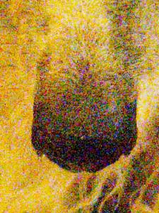 Zhivago-2-orig-detail-2.jpeg