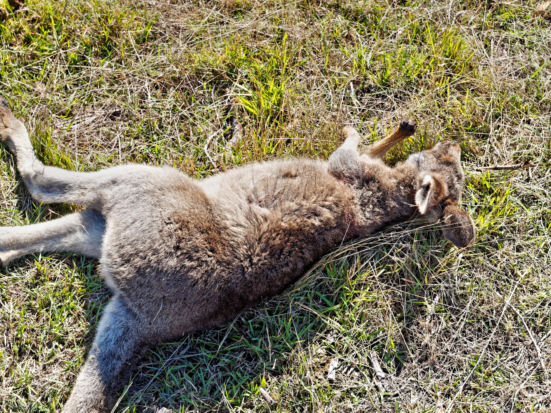 This should be Nikolai-kangaroo-6.jpeg.  Is it missing?