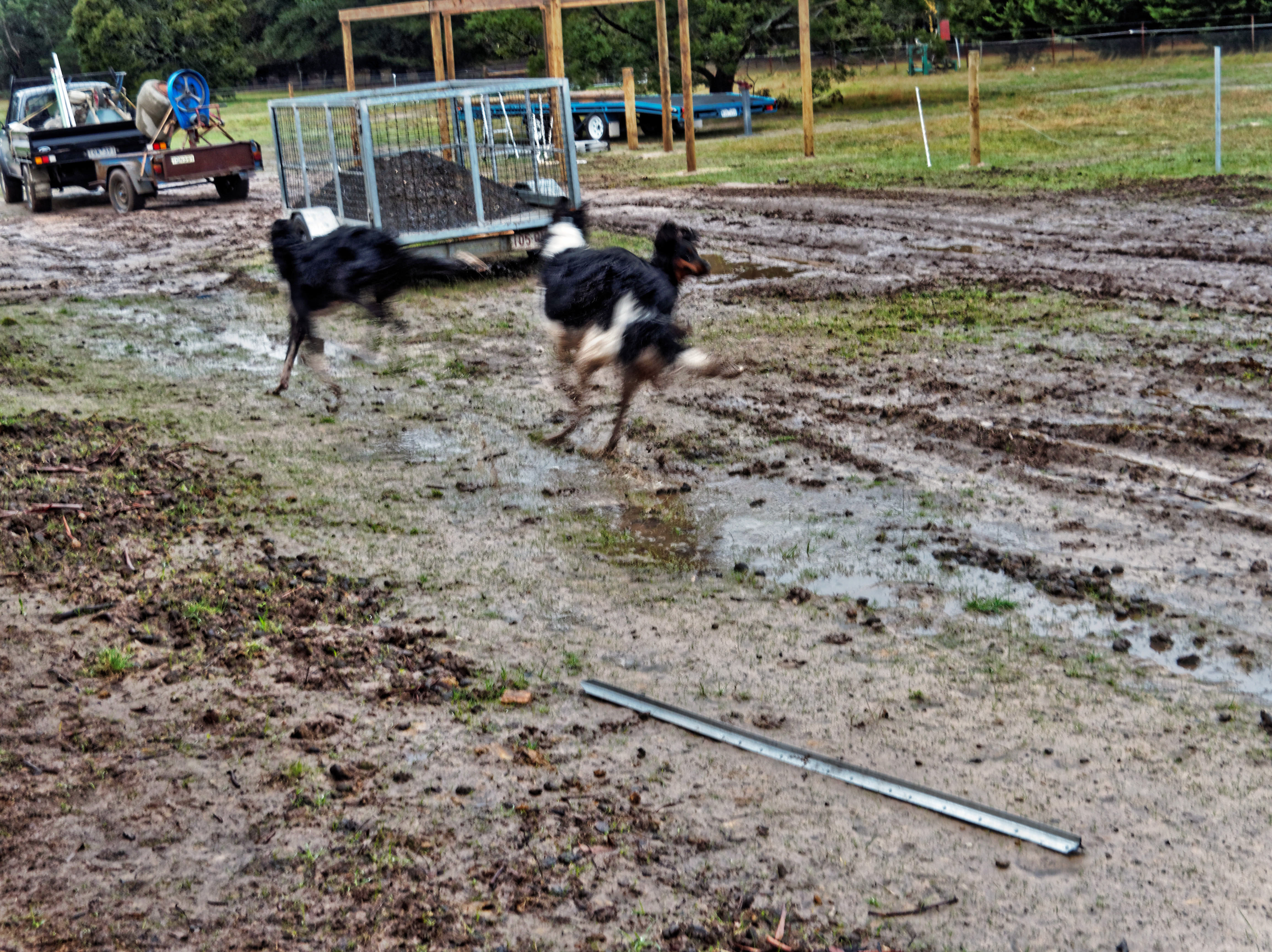 Dogs-5.jpeg