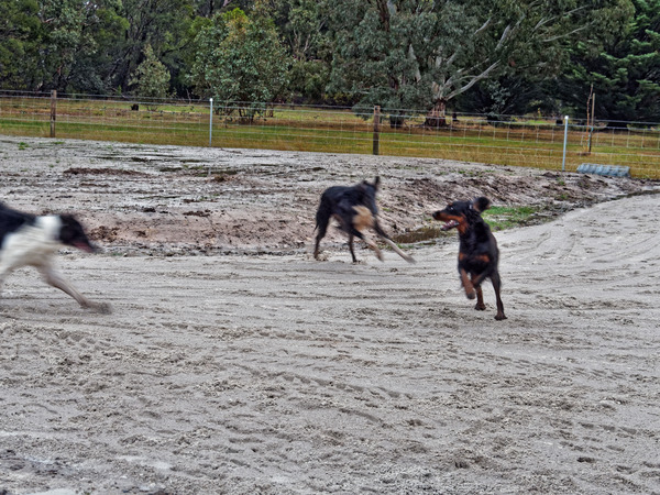 Dogs-3.jpeg