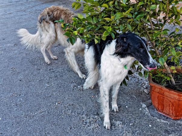 Dogs-in-Dereel-11.jpeg