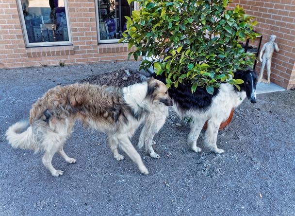Dogs-in-Dereel-12.jpeg