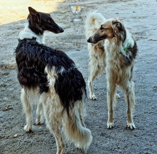 Dogs-in-Dereel-17.jpeg