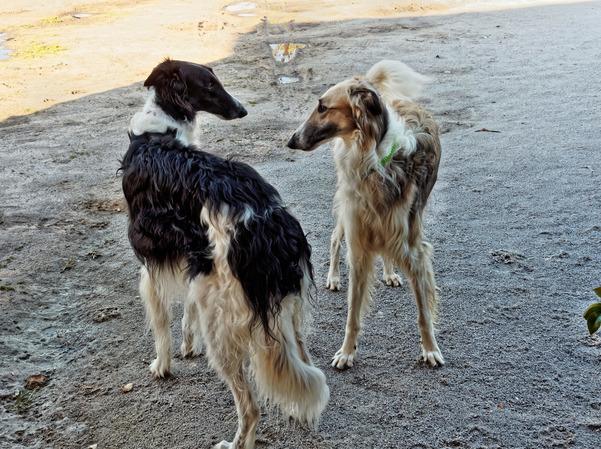 Dogs-in-Dereel-19.jpeg