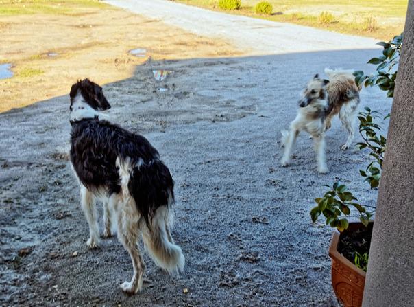 Dogs-in-Dereel-25.jpeg