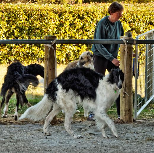 Dogs-in-Dereel-28.jpeg